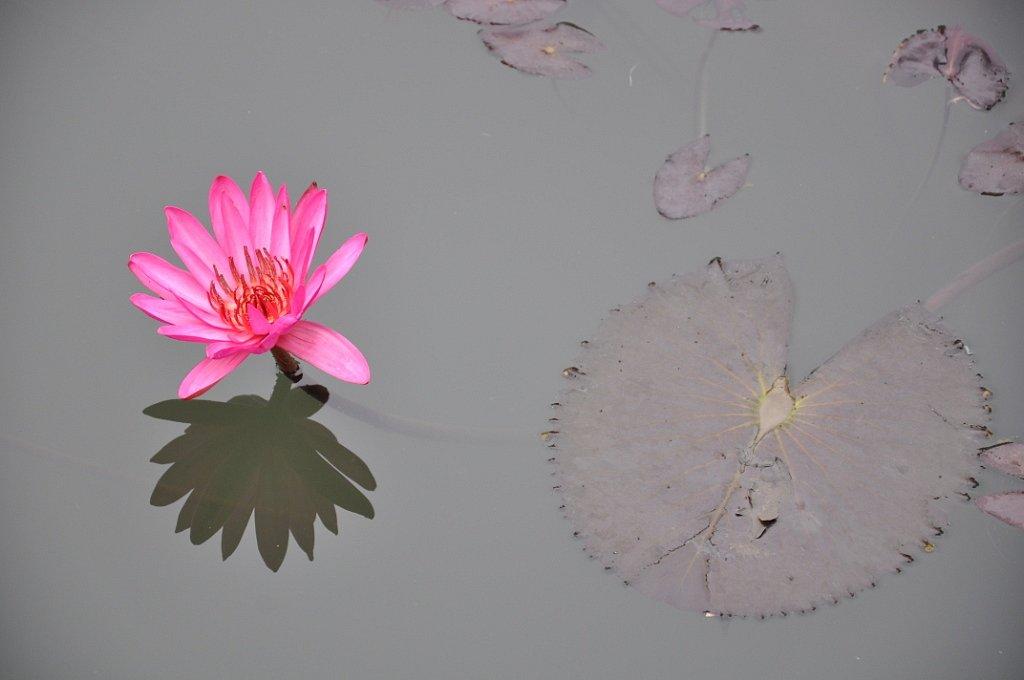 Fleurs : juin 2018